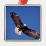 bald eagle, Haliaeetus leucocephalus, in flight 3 Square Metal Christmas Ornament