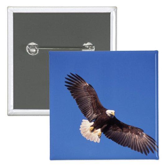 bald eagle, Haliaeetus leucocephalus, in flight 3 Pinback Button