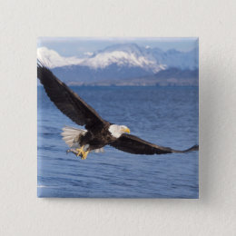 bald eagle, Haliaeetus leucocephalus, in flight 4 Button