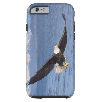 bald eagle, Haliaeetus leucocephalus, in flight 4 Tough iPhone 6 Case