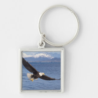 bald eagle, Haliaeetus leucocephalus, in flight 4 Keychain