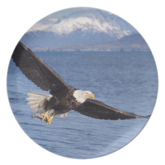 bald eagle, Haliaeetus leucocephalus, in flight 4 Melamine Plate