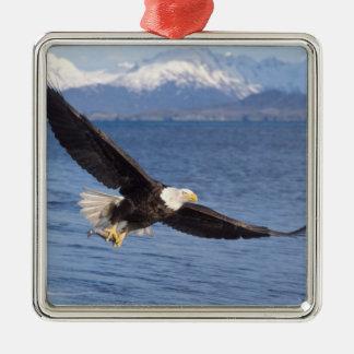bald eagle, Haliaeetus leucocephalus, in flight 4 Metal Ornament