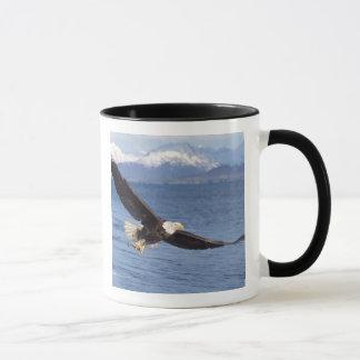 bald eagle, Haliaeetus leucocephalus, in flight 4 Mug