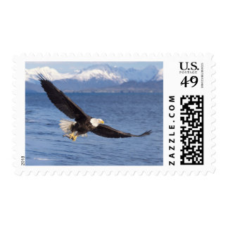 bald eagle Haliaeetus leucocephalus in flight 4 Postage Stamps