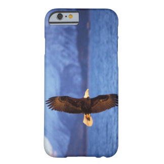 bald eagle, Haliaeetus leucocephalus, in flight Barely There iPhone 6 Case