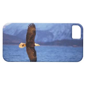 bald eagle, Haliaeetus leucocephalus, in flight iPhone SE/5/5s Case