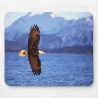 bald eagle, Haliaeetus leucocephalus, in flight Mouse Pad