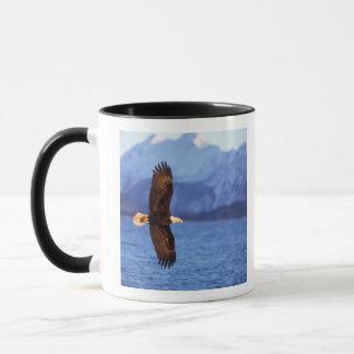 bald eagle, Haliaeetus leucocephalus, in flight Mug