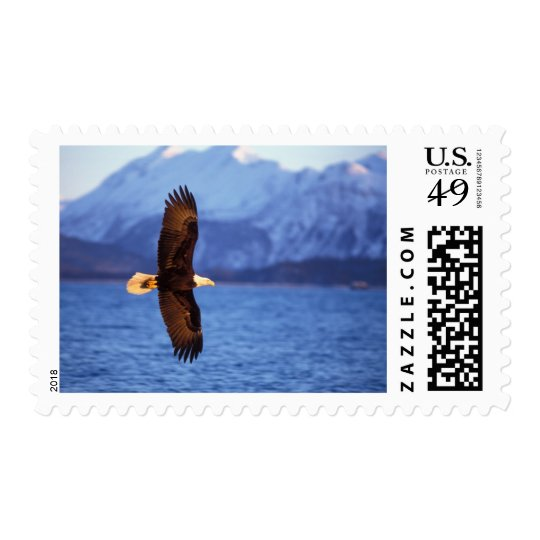 bald eagle, Haliaeetus leucocephalus, in flight Postage