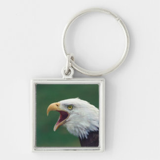 Bald Eagle Haliaeetus leucocephalus Keychains