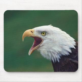 Bald Eagle (Haliaeetus leucocephalus) Mouse Pad