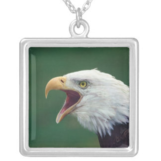 Bald Eagle (Haliaeetus leucocephalus) Square Pendant Necklace