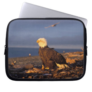 bald eagle, Haliaeetus leucocephalus, on a beach Laptop Sleeve