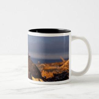 bald eagle, Haliaeetus leucocephalus, on a beach Two-Tone Coffee Mug