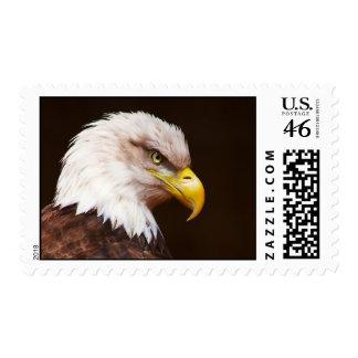 Bald eagle Haliaeetus leucocephalus Postage Stamps