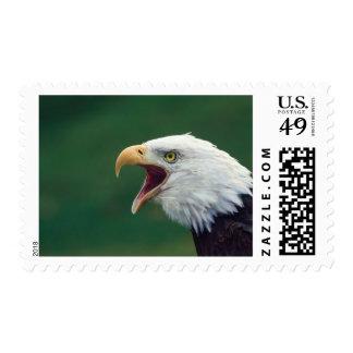 Bald Eagle Haliaeetus leucocephalus Postage Stamp
