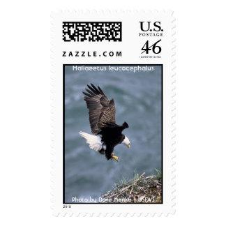 Bald Eagle - Haliaeetus leucocephalus Postage