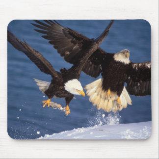 bald eagle, Haliaeetus leucocephalus, taking off Mouse Pad