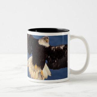 bald eagle, Haliaeetus leucocephalus, taking off Two-Tone Coffee Mug