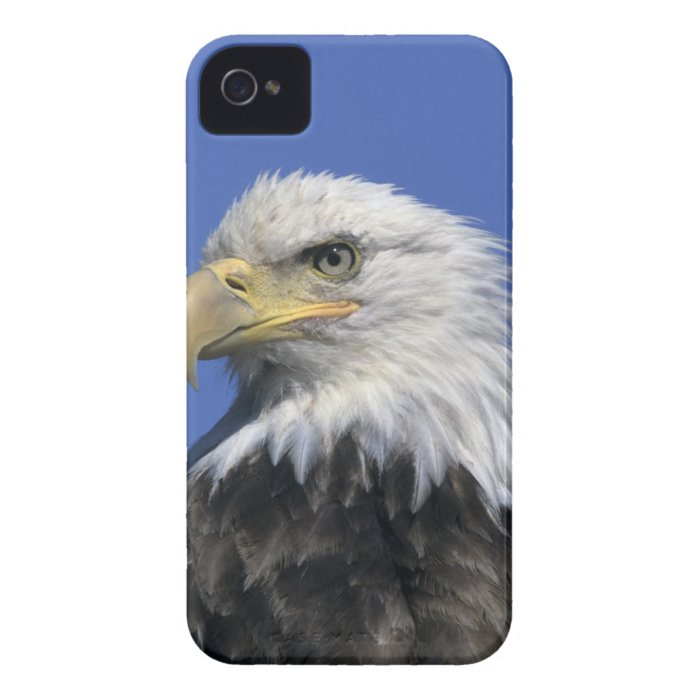 Bald Eagle, (Haliaeetus leucocephalus), wild, Case-Mate iPhone 4 Case