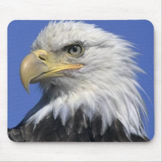 Bald Eagle, (Haliaeetus leucocephalus), wild, Mouse Pad