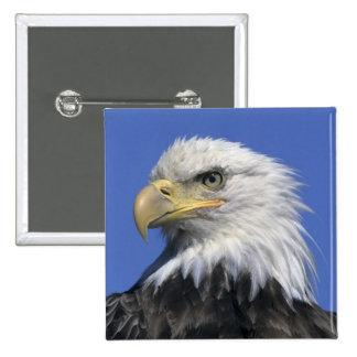 Bald Eagle, (Haliaeetus leucocephalus), wild, Pinback Button
