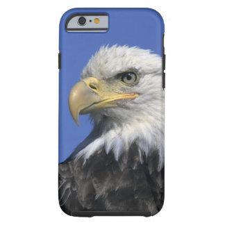 Bald Eagle, (Haliaeetus leucocephalus), wild, Tough iPhone 6 Case
