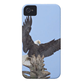 Bald Eagle (Haliaeetus leucocephalus) with wings Case-Mate iPhone 4 Case
