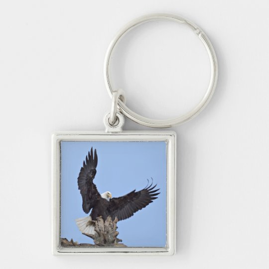 Bald Eagle (Haliaeetus leucocephalus) with wings Keychain