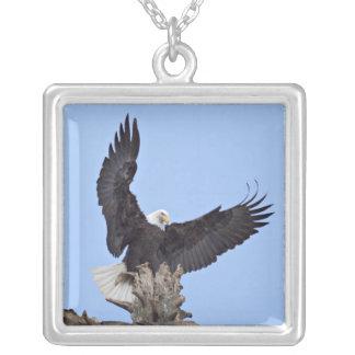 Bald Eagle (Haliaeetus leucocephalus) with wings Square Pendant Necklace