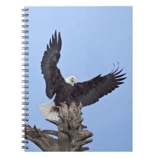 Bald Eagle (Haliaeetus leucocephalus) with wings Notebook
