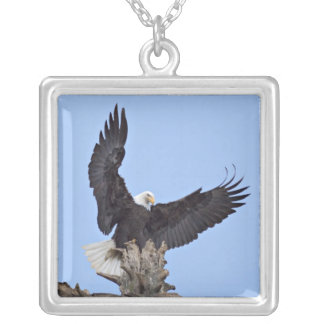 Bald Eagle (Haliaeetus leucocephalus) with wings Silver Plated Necklace