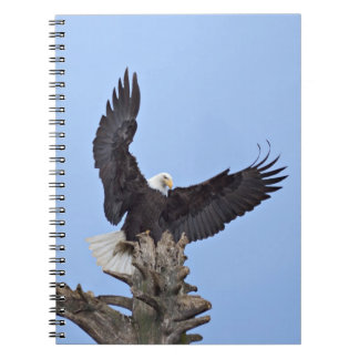 Bald Eagle (Haliaeetus leucocephalus) with wings Spiral Notebook