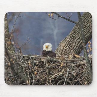 Bald Eagle having a bad hair day Mouse Pad
