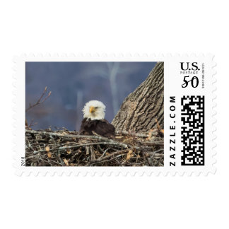 Bald Eagle having a bad hair day Postage
