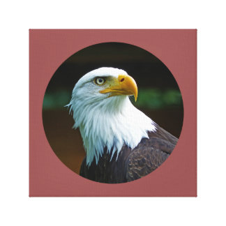 Bald Eagle Head 001 02.7 rd Canvas Print