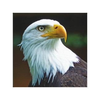 Bald Eagle Head Canvas Print