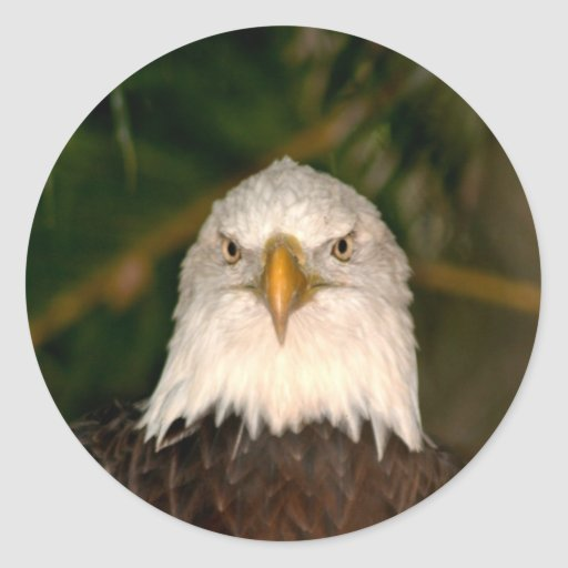 Bald Eagle Head On photograph design Classic Round Sticker