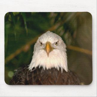 Bald Eagle Head On photograph design Mouse Pad