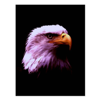 Bald Eagle Head Postcard