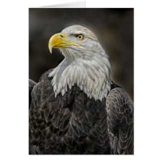 Bald Eagle Head Shot Card