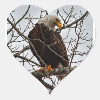 Bald Eagle Heart Sticker