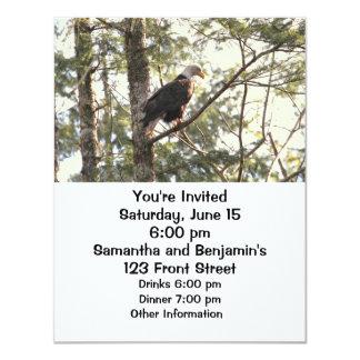 Bald Eagle in a Tree Card