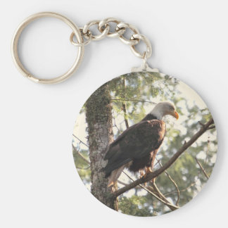 Bald Eagle in a Tree Key Chains