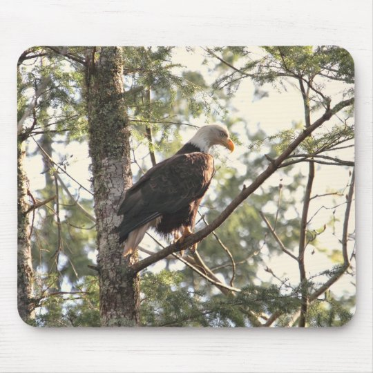 Bald Eagle in a Tree Mouse Pad