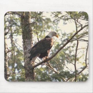 Bald Eagle in a Tree Mouse Pads