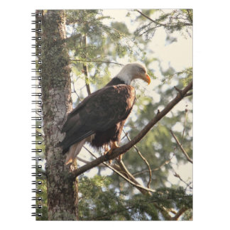 Bald Eagle in a Tree Spiral Note Books