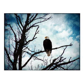 Bald Eagle in a Tree With Blue Sky and Clouds Postcard