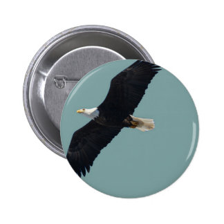 bald eagle in flight pinback buttons
